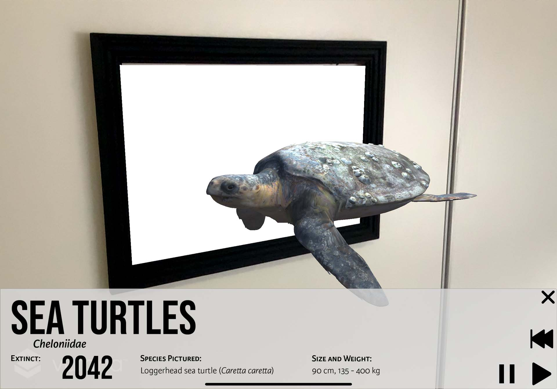 Augmented reality iPad app showing an animated sea turtle, detailing the species' extinction.