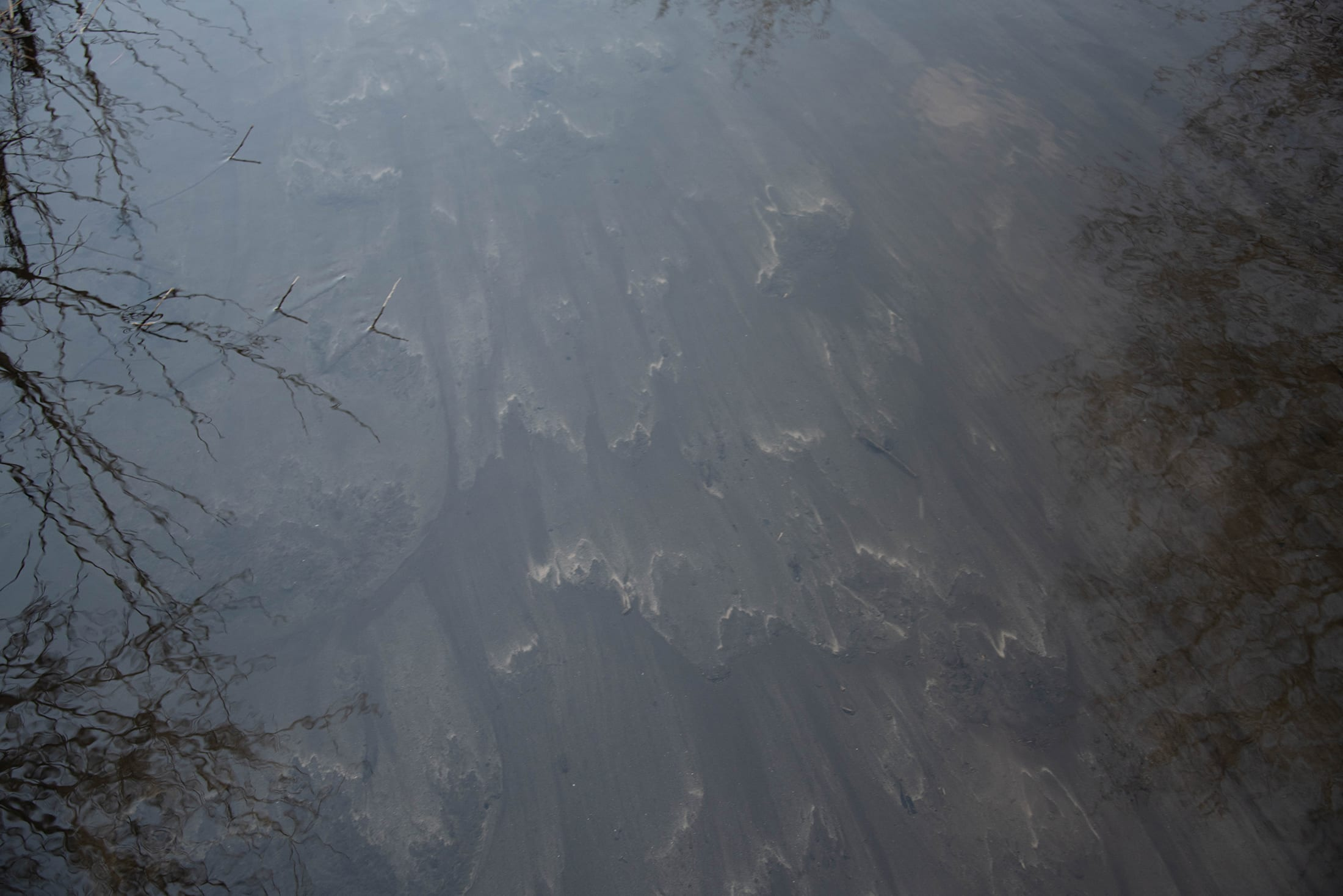 Riverbed with trees reflected in water